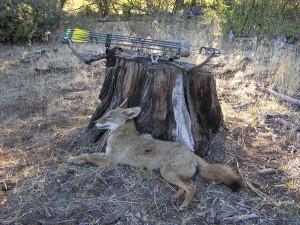 Coyote Hunting Oregon